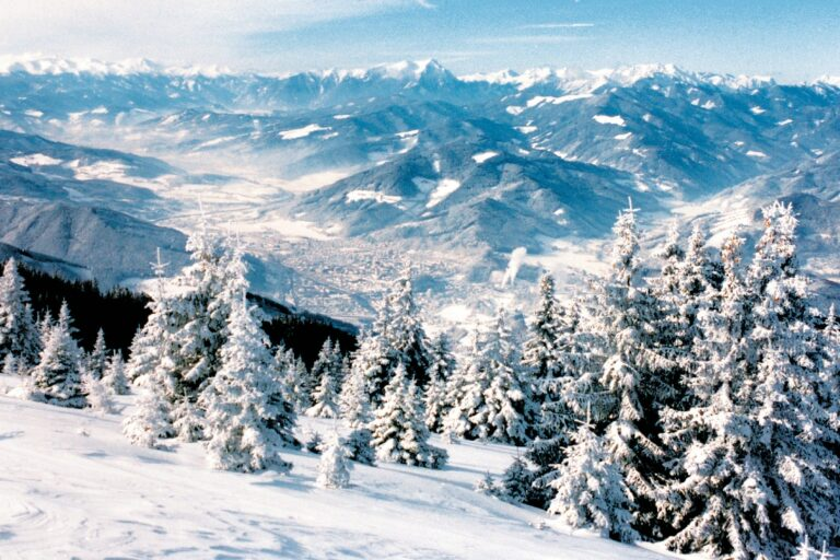 Rennfeld im Winter.